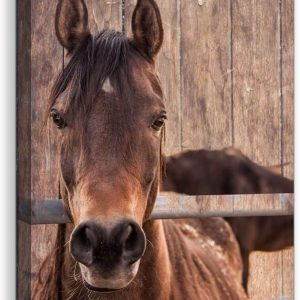 country wall art country horse